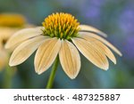 Yellow Coneflower  With...
