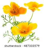 flower eschscholzia californica ... | Shutterstock . vector #487333579