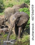 Small photo of African elephant with stretched out trunk drinking water