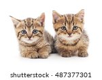 Stock photo two small kittens isolated on a white background 487377301