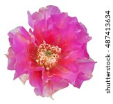pink flower | Shutterstock . vector #487413634