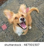 Stock photo happy puppy 487501507