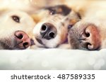 Three Dogs Noses Are Close To...
