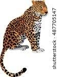 vector leopard panthera pardus | Shutterstock .eps vector #487705147