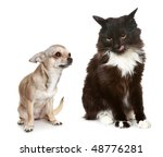 Stock photo the puppy and kitten in studio 48776281