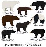 different species of bears... | Shutterstock .eps vector #487843111