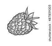 raspberry fruit. superfood...   Shutterstock .eps vector #487859305