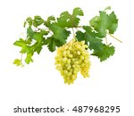 branch of grapes with berries... | Shutterstock . vector #487968295
