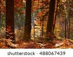 beautiful autumn forest   Shutterstock . vector #488067439