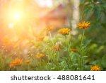image of sunny garden... | Shutterstock . vector #488081641