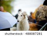 Russian Borzoi Dog At Dog Show...