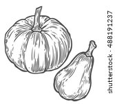 pumpkins. natural organic hand...   Shutterstock .eps vector #488191237