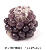 Small photo of Blackberry tainted with mold isolated on white background