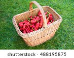 organically grown red pepper in ... | Shutterstock . vector #488195875