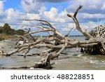 Driftwood Beach  Jekyll Island...