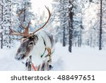 Reindeer In A Winter Forest In...