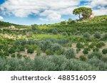 orchard  lime  lemon  orange ... | Shutterstock . vector #488516059