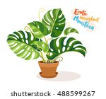 exotic monstera in a ceramic... | Shutterstock .eps vector #488599267