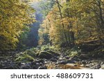 Colorful Leaves And Rocks In...