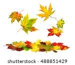 isolated multi colored autumn... | Shutterstock . vector #488851429