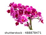 blooming pink orchid with many... | Shutterstock . vector #488878471