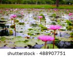 Blossom Pink Lotus Flowers In...