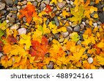 autumn maple leave on stone... | Shutterstock . vector #488924161