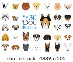 Dog Breeds Vector Collection ...