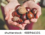 Handful Of Walnuts And Conkers...