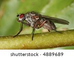 extreme macro magnification of... | Shutterstock . vector #4889689