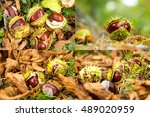 Four Images Of Horse Chestnuts...