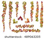 set of autumn vector ivy...