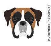 Boxer Dog Isolated On White...