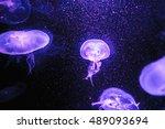 Jellyfish In The Dark Background