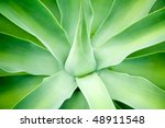 Agave green leaves close-up, shallow focus - stock photo