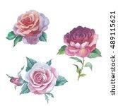 wildflower rose flower in a...   Shutterstock . vector #489115621