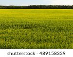 view of the farmland fields. | Shutterstock . vector #489158329