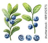 blueberry. watercolor botanical ... | Shutterstock . vector #489192571