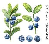 blueberry. watercolor botanical ... | Shutterstock . vector #489192571