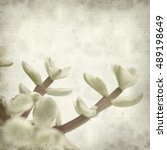 Small photo of textured old paper background with Portulacaria afra succulent plant