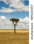 single tree in savanna  | Shutterstock . vector #489265357