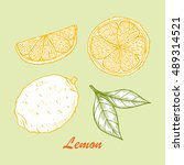 vector fruits. hand drawn... | Shutterstock .eps vector #489314521