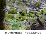 Vibrant Green Moss Growing On ...