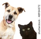 Stock photo close up portrait of a cat and dog isolated on white background 48934372