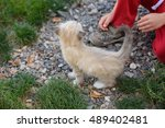 kid strokes the little kitten | Shutterstock . vector #489402481