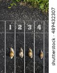 snail run  near the finish line ... | Shutterstock . vector #489432307