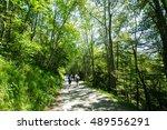 Switzerland - Olten Forest