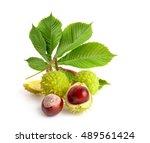 Horse Chestnut  Aesculus ...