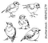birds set. hand drawn cute... | Shutterstock .eps vector #489691279