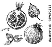 pomegranate set  hand drawings... | Shutterstock .eps vector #489692515